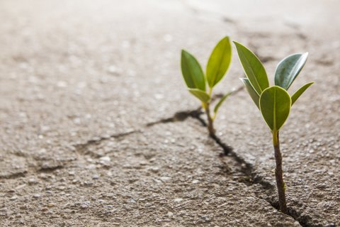 helping mentee develop resilience